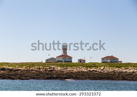 Many seabirds on rocks of Machias Seal Island Light,  one of few lighthouses still staffed by Light Keepers.  It is a preserve for nesting seabirds. - stock photo