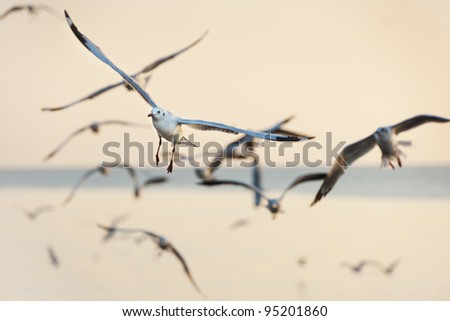 many seagull flying in sky - stock photo