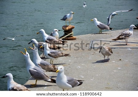 Many seagulls on the pier