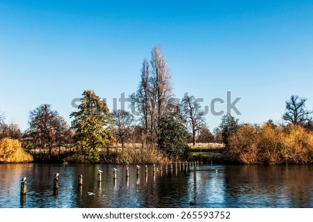 many seagulls on wooden posts at the Serpentine lake in Hyde Park, London, UK. - stock photo