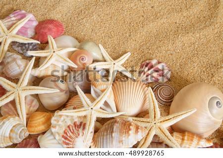 stock-photo-many-seashells-and-sea-starf