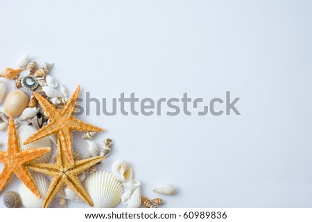 many seashells and starfish isolated on white background.