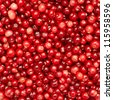 Many small ripe cranberries as a texture - stock photo