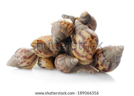 many snails isolated on white background - stock photo