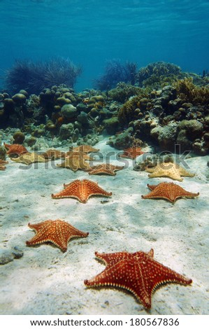 Many starfish underwater with a coral reef, Atlantic ocean, Bahamas islands - stock photo