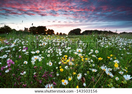 many summer wildflowers on meadow at dramatic pink sunset - stock photo