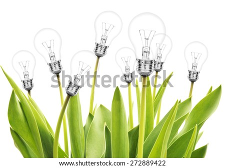 Many tulips with lamp bulms on white background - stock photo