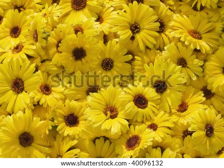 Many yellow flowers over background - stock photo