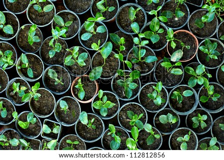 many young potted sprouts in greenery, top view - stock photo
