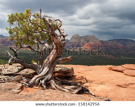 Manzanita tree in the foreground to a scenic landscape view of the Sedona area - stock photo