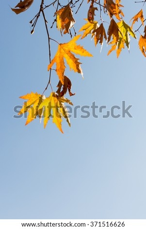 Maple branch in the city against the sky and industrial buildingsCorrecting the white balance - stock photo