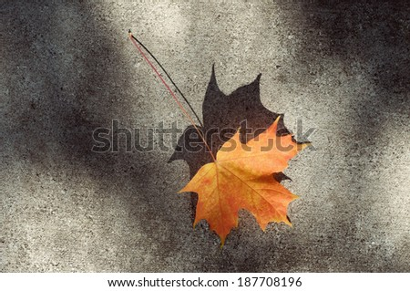 Maple leaf on pavement - stock photo