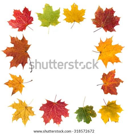 maple leafs frame - stock photo