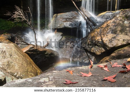 Maple leafs near waterfall in Phukradueng National Park ,Thailand.