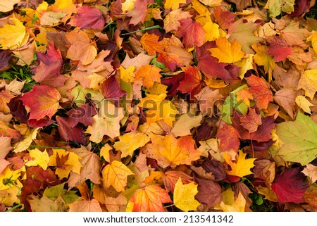 Maple leaves autumn background, soft focus - stock photo