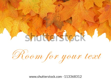 Maple leaves isolated on white - stock photo