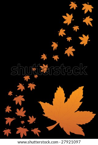 Maple leaves of different size and shape on black background