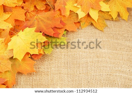 Maple leaves on sack background - stock photo