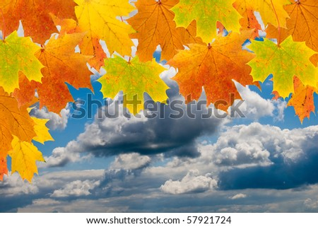 Maple leaves with blue sky and white clouds - stock photo