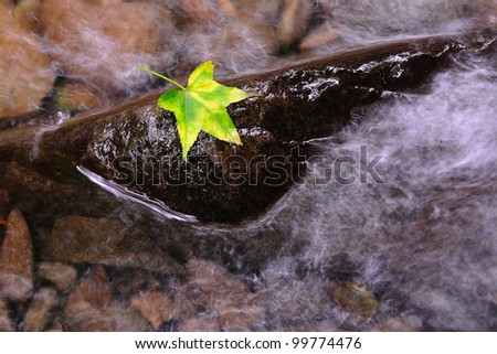 Maple on the stone with river