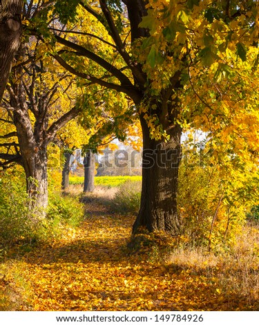 Maple tree in autumn alley - stock photo