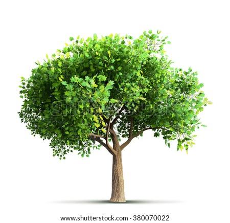 maple tree isolated 3D rendering - stock photo
