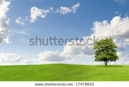 Maple tree on a meadow against a cloudy sky - stock photo