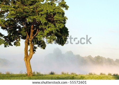 Maple tree on the lake shore with the morning mist in the background. - stock photo