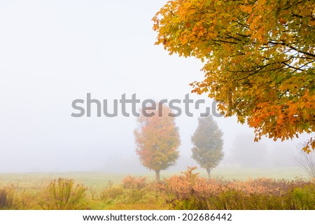 Maple trees during early morning fog on an autumn morning, Stowe, Vt., USA. - stock photo