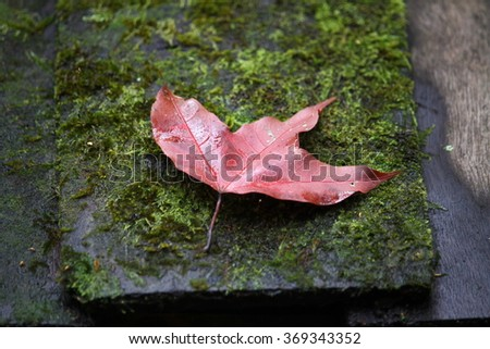 Maple with fallen leaves on mossy ground