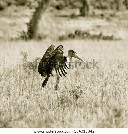 Marabou Stork on the Masai Mara National Reserve - Kenya (stylized retro) - stock photo