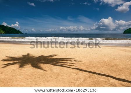 Maracas bay Trinidad and Tobago beach palm tree shadow Caribbean  - stock photo
