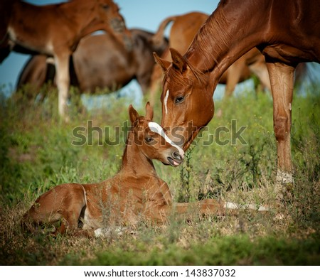 mare and foal in pasture - stock photo