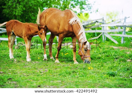 Mare and foal on a pasture together - stock photo
