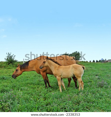 Mare and her foal grazing in a pasture - stock photo
