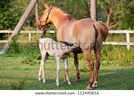 Mare and her foal in meadow - stock photo