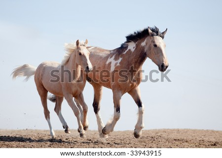 Mare running in field with foal - stock photo
