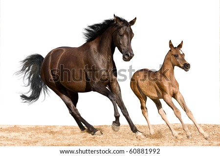 Mare with foal running on white background