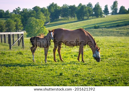 Mare with her foal in pastures of horse farms on sunset. selective focus - stock photo