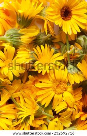 marigold, background - stock photo