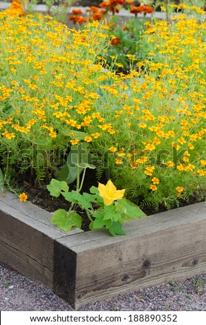 marigold flowers and other herbs, close-up - stock photo