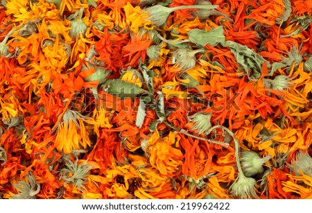 Marigold flowers are drying for herbal medicine use - stock photo