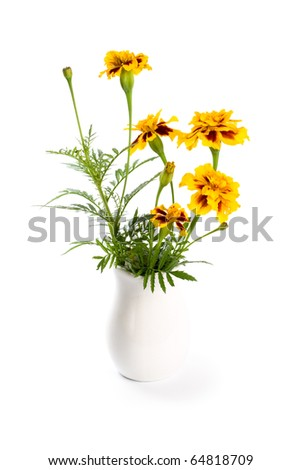 marigold flowers in vase isolated on a white background - stock photo