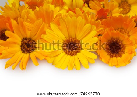 marigolds isolated on white - stock photo