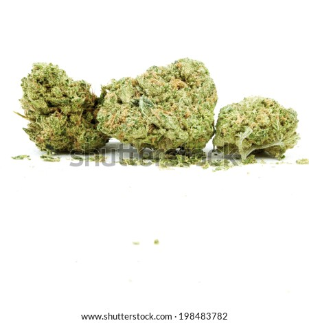 Marijuana and Cannabis White Background, Medical and Recreational Weed - stock photo