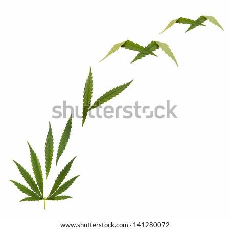 marijuana free - Hemp leaf - Marijuana (Cannabis) - stock photo