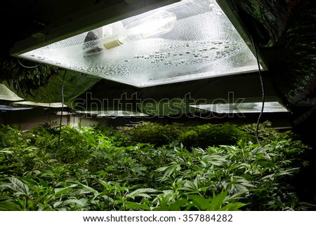 Marijuana grow room with a High Pressure Sodium (HPS) light bulb - stock photo