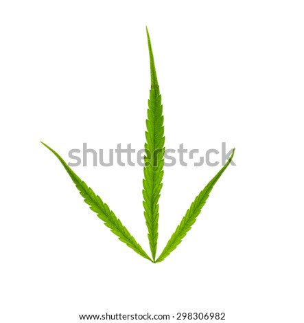 Marijuana leaf on white background .Narcotic plants. image for design of social advertising
