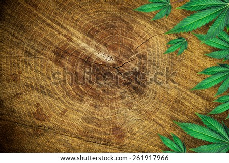 marijuana leaves on wooden background - stock photo