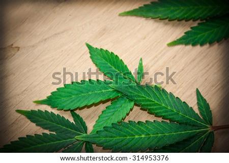 marijuana leaves on wooden table - stock photo